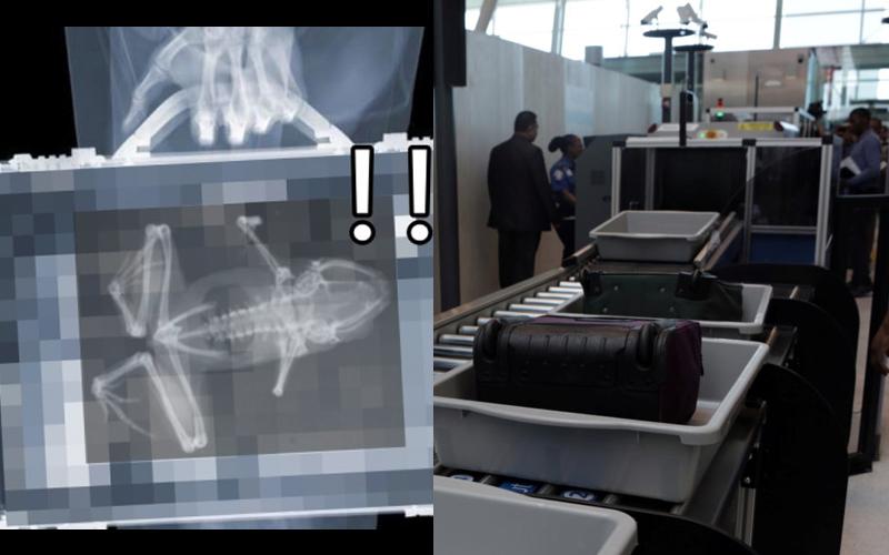 她被美國海關攔下來問「行李箱裡怎麼有青蛙」抖著打開行李箱卻笑歪:這後勁太強了!