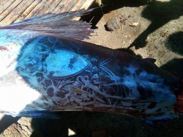 這邊是菲律賓漁民捕獲了「全身刺青的怪魚」引發熱議,仔細看上面的圖騰...起雞皮疙瘩了!圖片的自定義alt信息;545371,725398,K.R,91