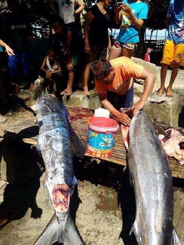 這邊是菲律賓漁民捕獲了「全身刺青的怪魚」引發熱議,仔細看上面的圖騰...起雞皮疙瘩了!圖片的自定義alt信息;545371,725398,K.R,26