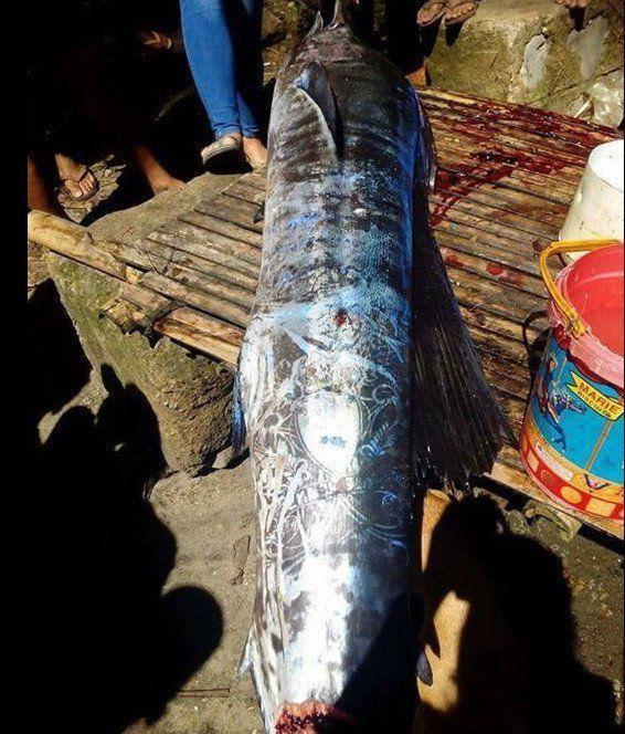 這邊是菲律賓漁民捕獲了「全身刺青的怪魚」引發熱議,仔細看上面的圖騰...起雞皮疙瘩了!圖片的自定義alt信息;545371,725398,K.R,9
